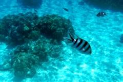 französisch-polynesien-bora-bora-coral-garden-02