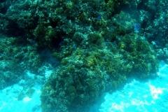 französisch-polynesien-bora-bora-coral-garden-04