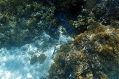französisch-polynesien-bora-bora-coral-garden-05
