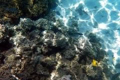 französisch-polynesien-bora-bora-coral-garden-06