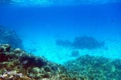 französisch-polynesien-bora-bora-coral-garden-07