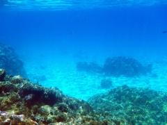 Bora Bora Coral Garden