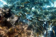 französisch-polynesien-bora-bora-coral-garden-08
