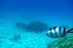 französisch-polynesien-bora-bora-coral-garden-09