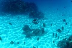 französisch-polynesien-bora-bora-coral-garden-10