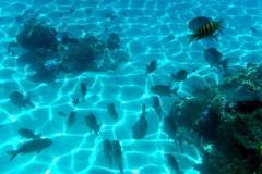 französisch-polynesien-bora-bora-coral-garden-11