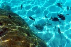 französisch-polynesien-bora-bora-coral-garden-12
