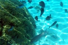 französisch-polynesien-bora-bora-coral-garden-13