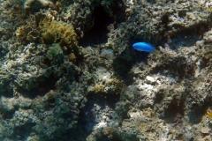 französisch-polynesien-bora-bora-coral-garden-15