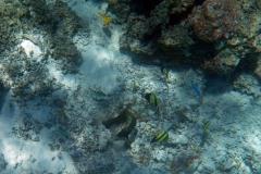französisch-polynesien-bora-bora-coral-garden-17