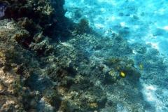französisch-polynesien-bora-bora-coral-garden-18