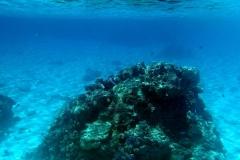 französisch-polynesien-bora-bora-coral-garden-20