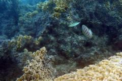 französisch-polynesien-bora-bora-matira-beach-12