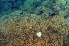 französisch-polynesien-bora-bora-matira-beach-14