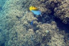 französisch-polynesien-bora-bora-matira-beach-16