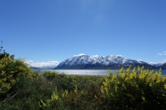neuseeland-fox-glacier-02