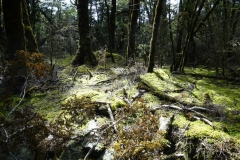 neuseeland-fox-glacier-06