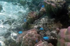 französisch-polynesien-huahine-sofitel-beach-04