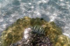 französisch-polynesien-huahine-sofitel-beach-06