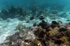 französisch-polynesien-huahine-sofitel-beach-09