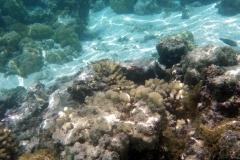 französisch-polynesien-huahine-sofitel-beach-10