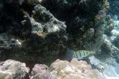 französisch-polynesien-huahine-sofitel-beach-11
