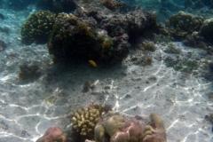 französisch-polynesien-huahine-sofitel-beach-14