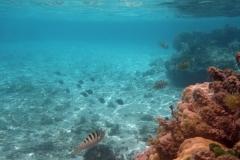 französisch-polynesien-huahine-sofitel-beach-15