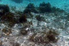 französisch-polynesien-huahine-sofitel-beach-16