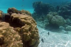 französisch-polynesien-huahine-sofitel-beach-17