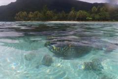 französisch-polynesien-huahine-sofitel-beach-21