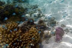 französisch-polynesien-huahine-sofitel-beach-22