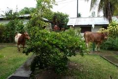 französisch-polynesien-huahine-02