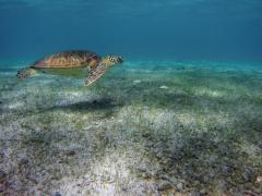 Tobago Cays Schnorcheln