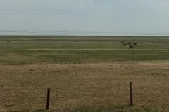 Immer wieder sieht man Tierherden (Pferde, Kühe, Ziegen, Schafe, Kamele).