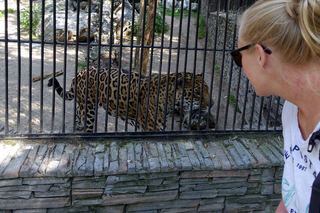 Kein Lieger, aber Eye of the Leopard.
