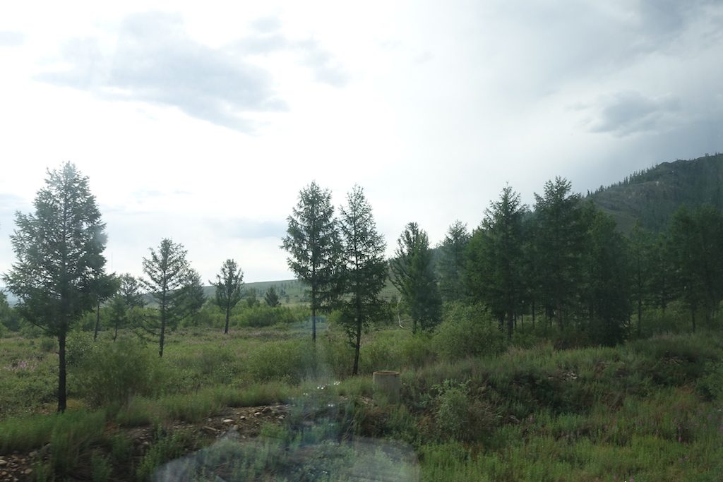 Kurz nachdem wir Ulaanbaatar verlassen haben gibt es noch Bäume...