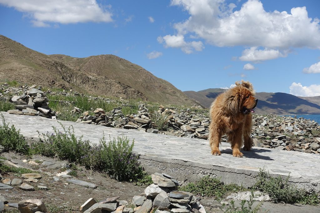 Himalaya Hundi