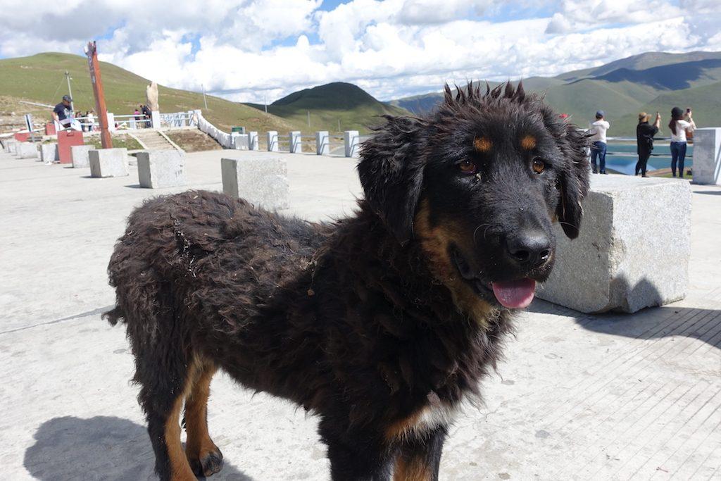 Tibet Straßen Hundi