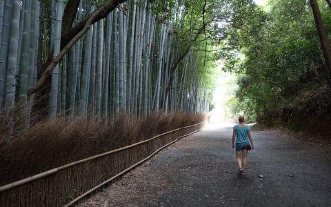 Bambuswald, auch hier muss man wieder sportlich sein um ein Foto ohne eine Menge von Menschen zu machen.