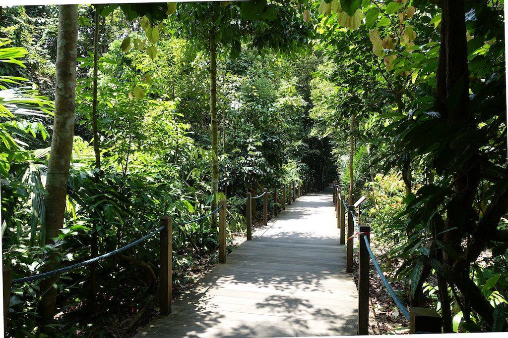 Urwald für Anfänger gibt es auch im Botanical Garden.
