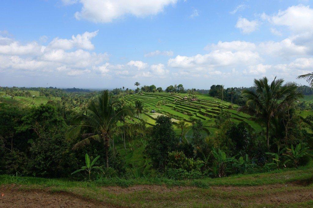 Endlich sind auch wir mal auf den berühmten Reisterrassen auf Bali angekommen.