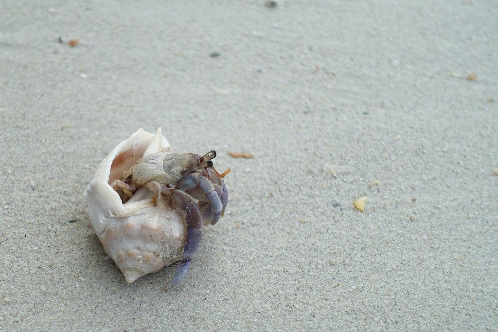 Mr. Hermit Crab war auch hier