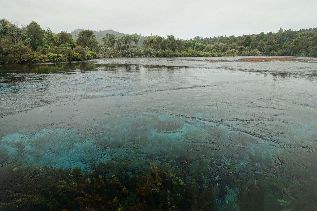 Abstecher zu den Pupu Springs auf dem Rückweg von Farewell Spit - hier kommen 14.000 Liter Wasser aus der Erde und das pro Sekunde!