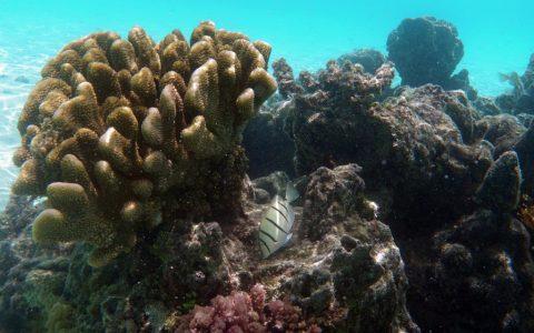 französisch-polynesien-huahine-sofitel-beach-05