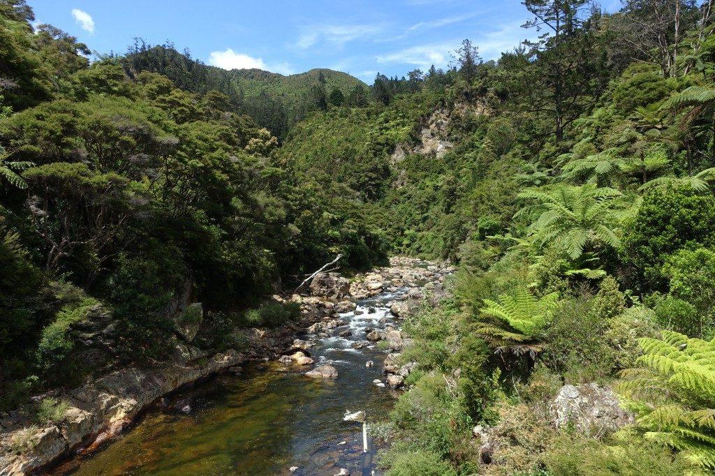 Die Schlucht in der die Karangahake Gorge liegt, ein ehemaliges Gold-Abbau Gebiet.