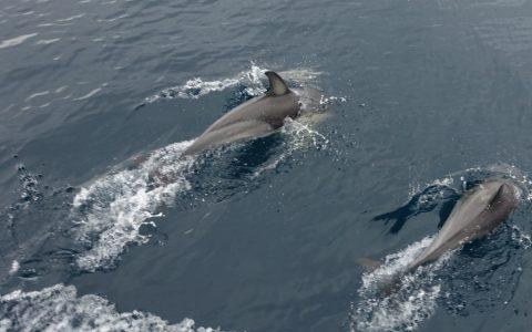 neuseeland-tauranga-dolphin-swim-05