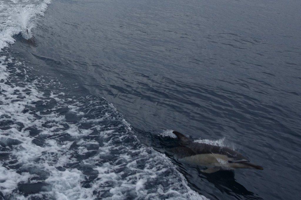 Dolphin Swim in Tauranga