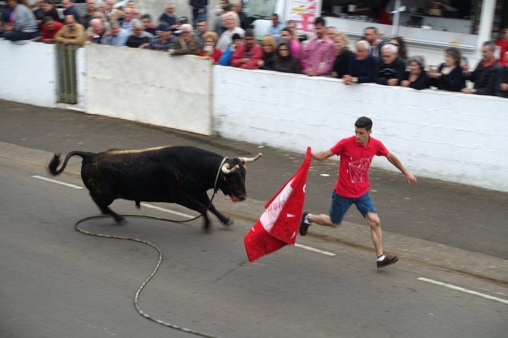Bull run auf Terceira